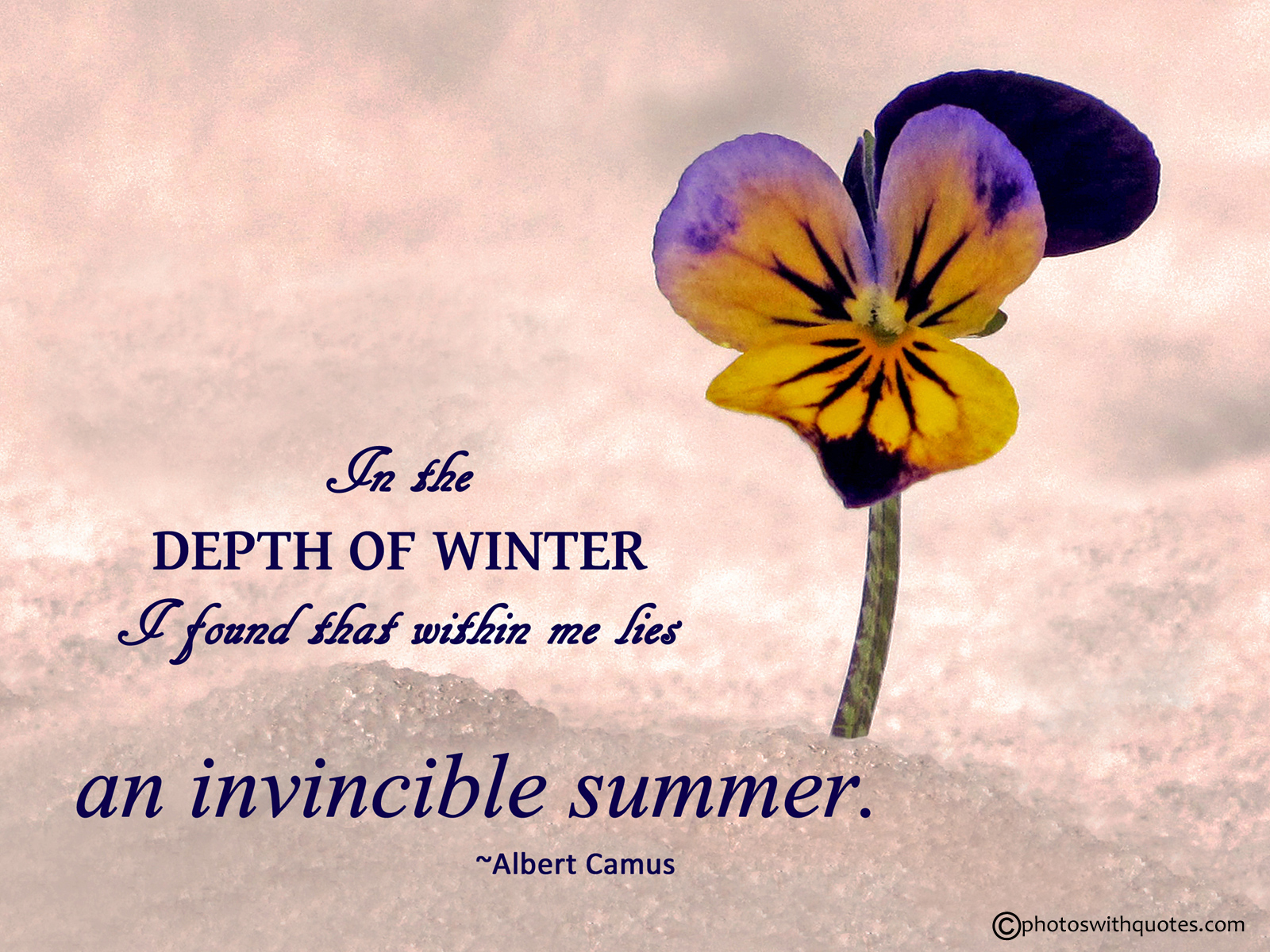 Seasons Of Life Quotes Pleasing Summerquotes28Coolhd